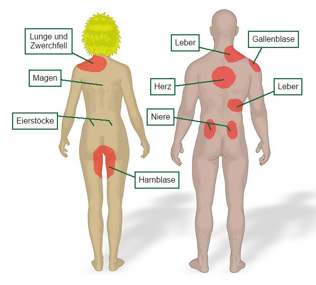 Lungenembolie Symptome Rückenschmerzen